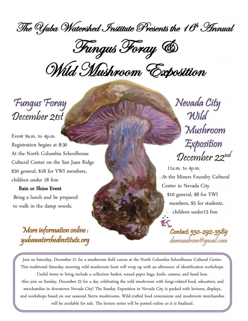 2013 Fungi flyer Final